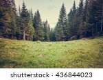 pine tree forrest in the... | Shutterstock . vector #436844023