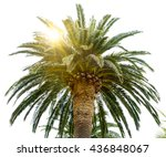Palm Tree Crown And Sun On The...