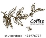 coffee branch with leaf  berry  ... | Shutterstock .eps vector #436976737