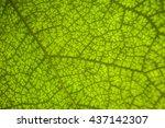 green texture leaf   Shutterstock . vector #437142307