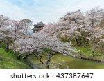 full bloom cherry blossom trees ...