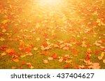 Autumn Natural Flat Sunny...