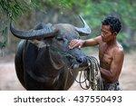 asian farmer and his buffalo...   Shutterstock . vector #437550493