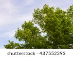 Beautiful Trees On Sky...