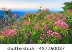 Small photo of Mountain Laurel, Kalmia Latifolia, is a native flowering plant blooming in the Blue Ridge Mountains near Asheville, North Carolina.