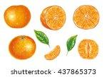 botanic realistic illustration... | Shutterstock . vector #437865373