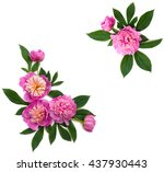 frame of pink peonies on a... | Shutterstock . vector #437930443