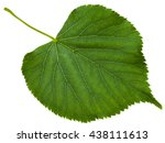 green leaf of tilia... | Shutterstock . vector #438111613