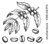 hand drawn vintage coffee plant.... | Shutterstock . vector #438146593