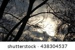 Abstract Branch Cloud Park Woodz