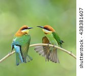 beautiful birds chestnut headed ...   Shutterstock . vector #438381607