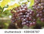 grape vine | Shutterstock . vector #438438787