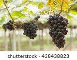 grape vine | Shutterstock . vector #438438823