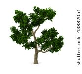 tree isolated on a white... | Shutterstock . vector #43882051