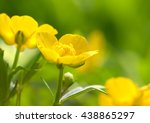 Buttercup On Background Of...
