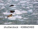 seals on ice kenai fjords alaska | Shutterstock . vector #438865483