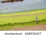 Small photo of Qingdao, Shandong, China - July 28, 2015: Workers are collecting and removing sea lettuce(enteromorpha) from Badaguan Beach(Taipingwan). Water bloom (Algal bloom) results from water pollution.