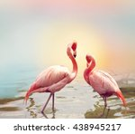 two pink flamingos near water | Shutterstock . vector #438945217