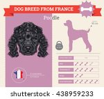 Vector Info Graphic Of Poodle...