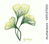 three ginkgo biloba hand drawn... | Shutterstock .eps vector #439157053