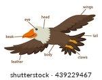 illustration of eagles... | Shutterstock .eps vector #439229467