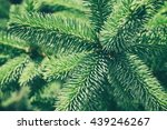 green spruce background in... | Shutterstock . vector #439246267