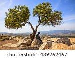 mountain nature landscape.green ... | Shutterstock . vector #439262467