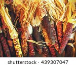 Bundles Of Indian Corn For A...
