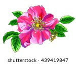 pink briar rose flower in...   Shutterstock . vector #439419847
