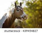 paint horse   Shutterstock . vector #439454827