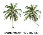 coconut palm trees isolated on... | Shutterstock . vector #439487437