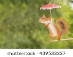 Red Squirrel  Standing In The...
