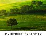 Green Summer Meadow Landscape....