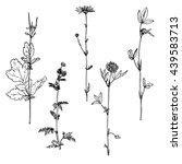 set of ink drawing wild flowers ... | Shutterstock .eps vector #439583713