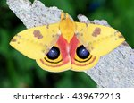 close up view of a beautiful... | Shutterstock . vector #439672213