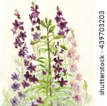 garden flowers purple  blue ... | Shutterstock . vector #439703203