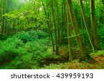 summer fog in the forest   Shutterstock . vector #439959193