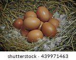 brown eggs at hay | Shutterstock . vector #439971463