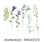 Watercolor Meadow Wild Flowers...