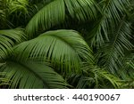 big tropical jungle leaves | Shutterstock . vector #440190067