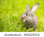 Beautiful Young Small Rabbit O...