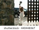 Bride Walks Like A Winner In...