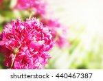 beautiful summer flowers... | Shutterstock . vector #440467387
