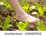 little  girl walking bare foot...   Shutterstock . vector #440485903