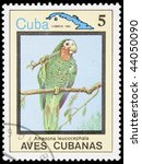 Small photo of Cuba - CIRCA 1983: A stamp printed in Cuba shows bird Amazona leucocephala, circa 1983
