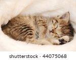 Stock photo cute kitten sleeping in the santa s cap 44075068