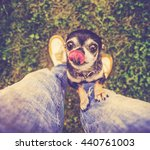 a cute chihuahua begging to be ... | Shutterstock . vector #440761003