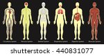 diagram of systems in human... | Shutterstock .eps vector #440831077