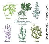 set of aromatic herbs image....   Shutterstock .eps vector #440920693