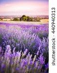 lavender field | Shutterstock . vector #440940313